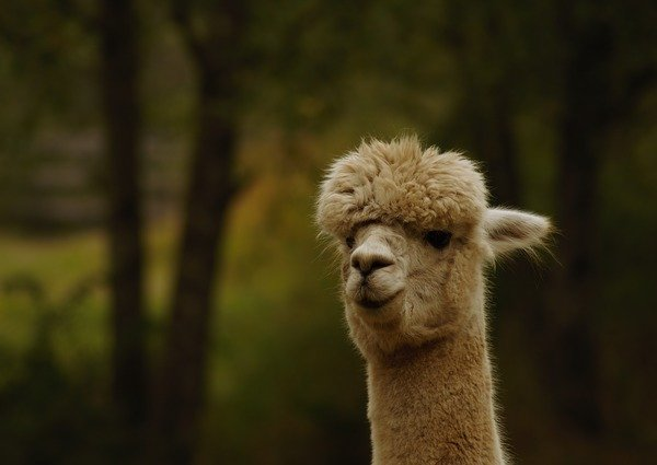 Как ухаживать за мехом альпаки карнавальная юбка из фатина